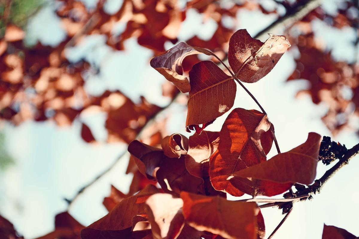 autumnleavesbadila